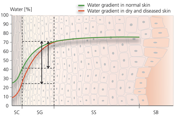 Water gradient in normal skin (green) as compared with water gradient in hyperosmotically stressed skin (red)