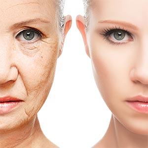 Telomere Rejuvenation Stops the Clock on Aging