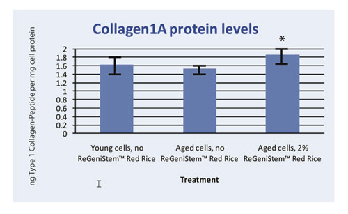 Graph 3. Protein assay showing the effect of ReGeniStem Red Rice on collagen synthesis