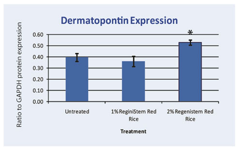 Graph 4. Protein assay showing the effect of ReGeniStem Red Rice on dermatopontin synthesis