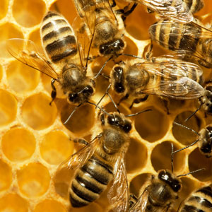 Bee-lieve It: Epigenetic Anti-aging