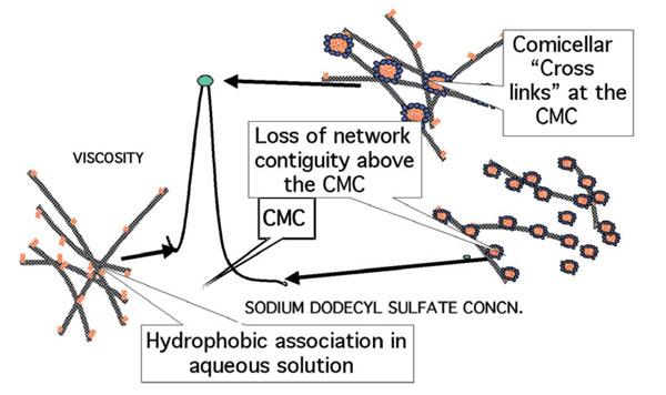 Figure 4. Comicellization of polymer hydrophobes with surfactant hydrophobes (hydrophobically-modified hydroxyethyl cellulose)