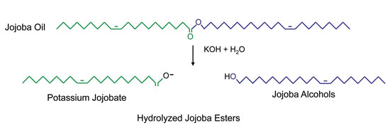 Figure 1. Formation of hydrolyzed jojoba esters (saponified jojoba oil)