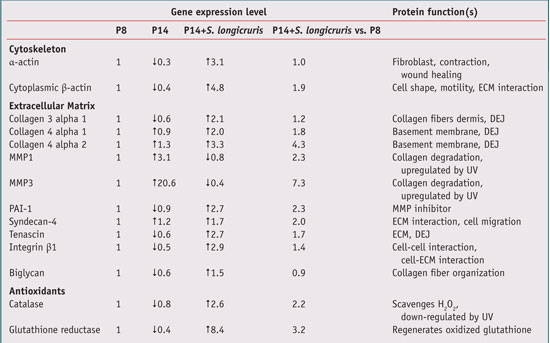 Table 2. In vitro Effect of S. longicruris on Fibroblast Gene Expression
