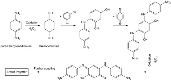 Figure 1. Mechanism of the dye formation by oxidation of PPD and coupling with resorcinol