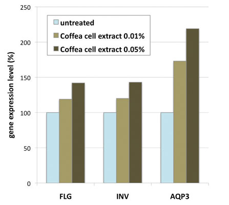 Figure 1. Gene expression analysis of filaggrin (FLG), involucrin (INV) and aquaporin-3 (AQP3) in keratinocytes treated with <em>C. bengalensis</em> cell extract