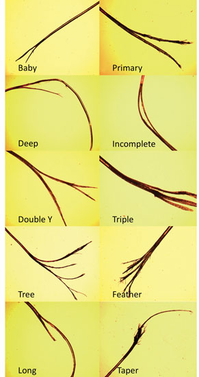 Figure 1. 10 categories of split ends