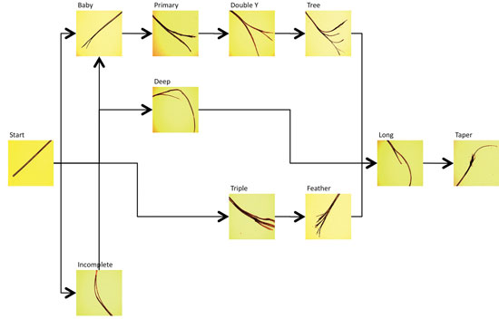 Figure 2. A theoretical life cycle of a split end