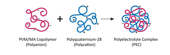 Figure 3. PEC comprised of PVM/MA Copolymer and Polyquaternium-28. The diameter of these microgels averages approximately 5 microns.<sup>9, 10</sup>