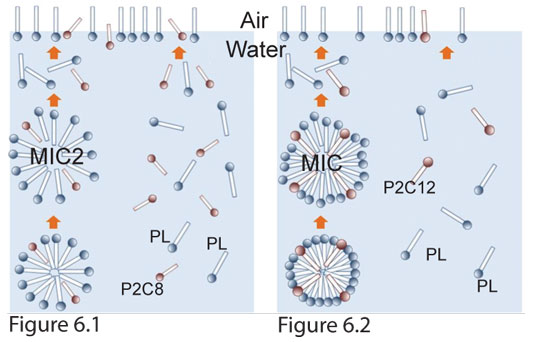 Figure 6. Schematic states of micelle and aqueous solution of P2C8 and P2C12  with PL, respectively