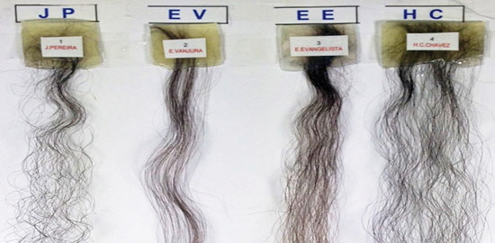 Figure 4. Images of the Brazilian hair tresses tested