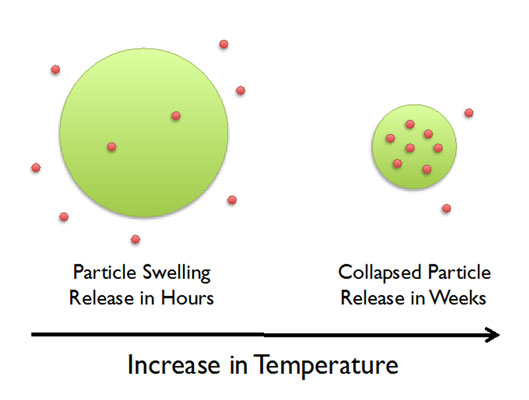 Figure 3. pNIPAM-based microgels loaded with peptides swell when cooled, releasing their payload in hours