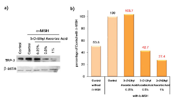 Figure 5. Western blotting detection: inhibitory effect of 3-O-ethyl ascorbic acid on tyrosinase (TRP-2)