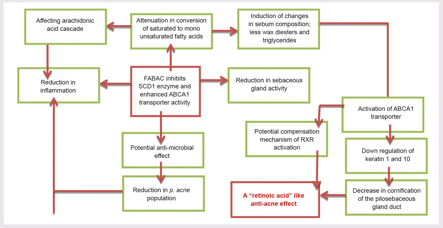 Figure 3. Diagram describing the hypothesis for FABAC anti-acne activity