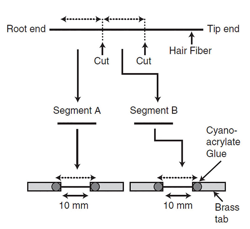 Figure 2. Sample preparation and mounting procedure
