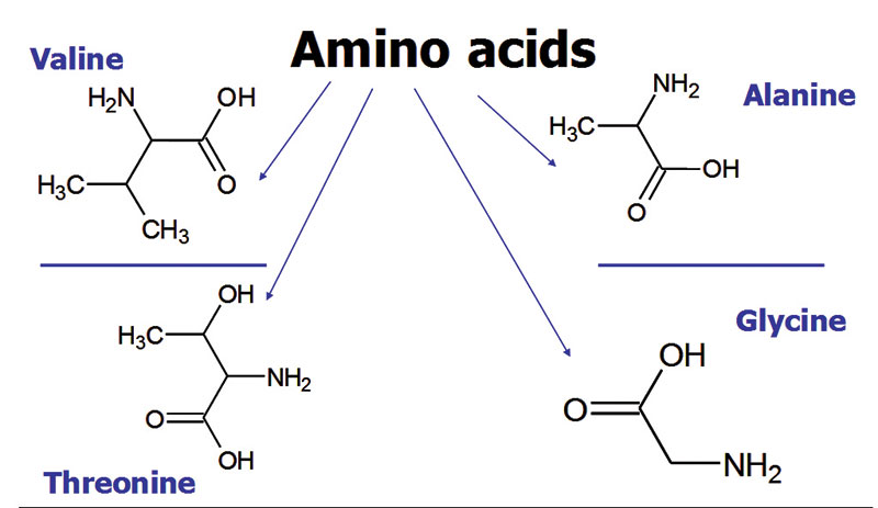 Figure 3. Four amino acids selected for the hydrophilic heads
