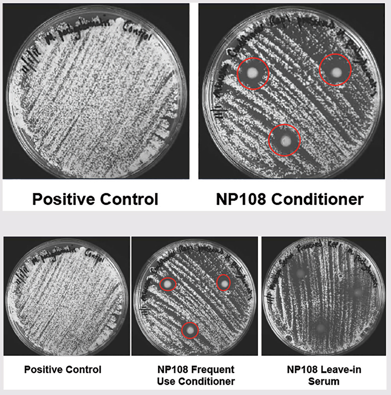 Figure 3. Efficacy of NP108 versus M. pachydermatis CBS6536 in the frequent use conditioner and leave-in serum