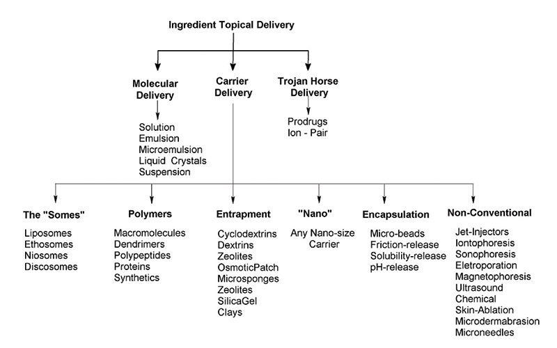 Figure 2. Generalized routes of ingredient delivery through the SC