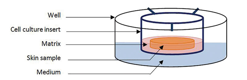 Figure 1. Schematic representation of new skin model loaded in a well culture plate