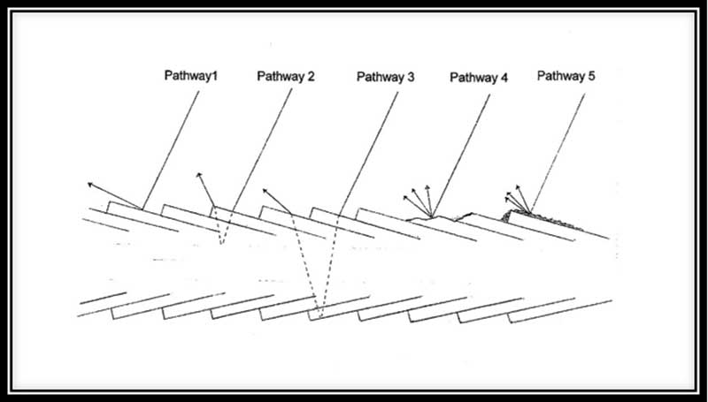 Figure 1. Potential pathways for the interaction of light with single hair fibers
