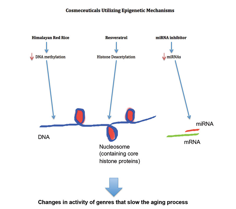 Cosmeceuticals Utilizing Epigenetic Mechanisms
