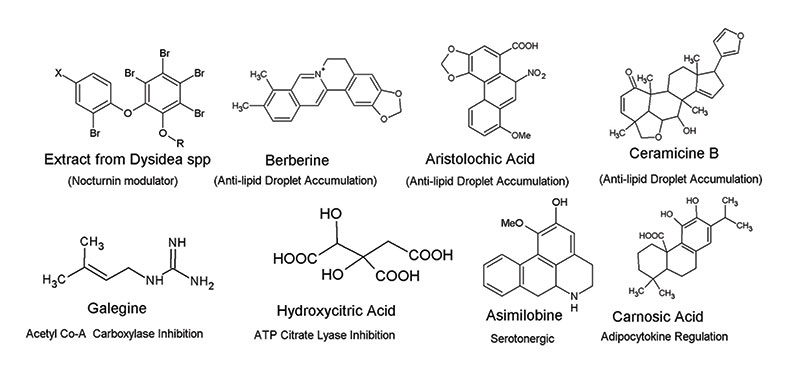 Figure 2. Adipose-affecting active agents can belong to a variety of chemical classes