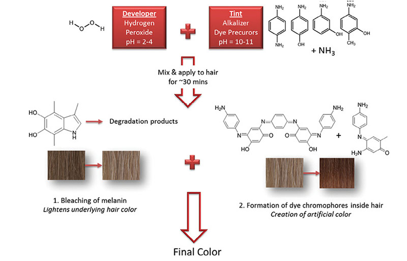 Figure 1. Hair coloring chemistry schematic