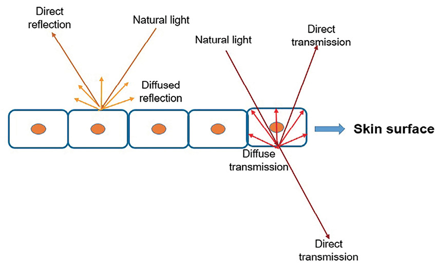 Figure 1. Soft focus development