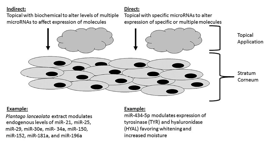 Figure 1. Two current approaches using miRNAs: indirect and direct