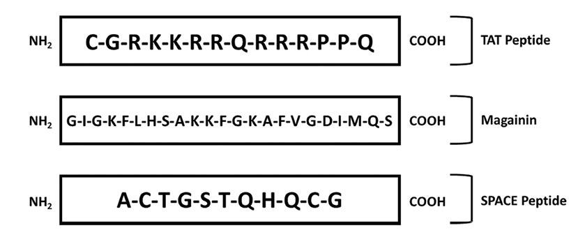 Figure 2. Amino acid sequences of the skin-penetrating TAT, magainin and SPACE peptides