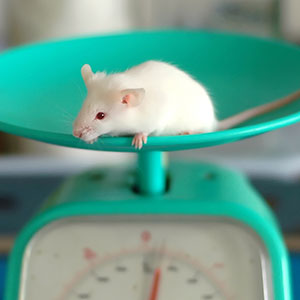 Animal Testing Alternatives Reach China