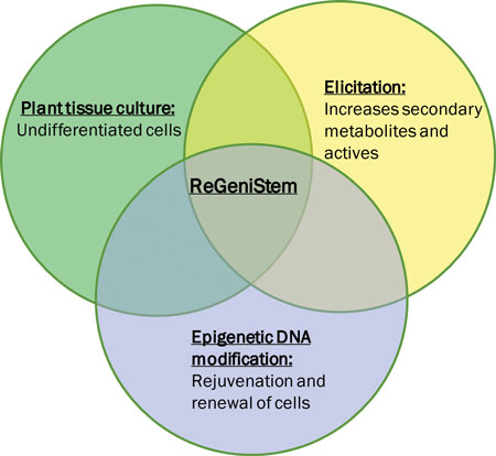 Harnessing the power of undifferentiated plant cells through elicitation