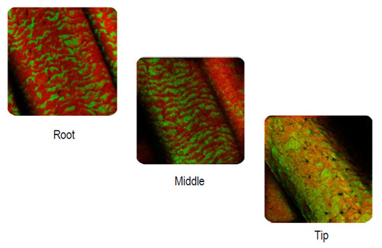 Figure 4. ToF-SIMS images show how Keramimic 2.0 intelligently restores damaged hair
