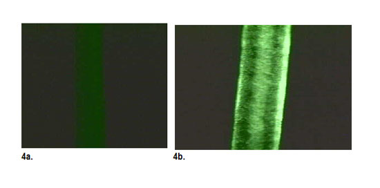 Figure 4. Fluorescence micrographs of hair treated with a control (4a) or Cutissential Behenyl 18-MEA (4b)