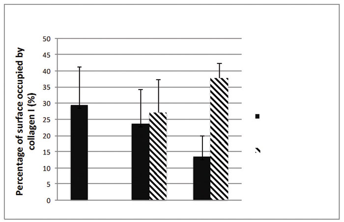Figure 3. Collagen type I content in human skin explants with or without a topical application of the active ingredient at 0.5% (image quantification analysis)