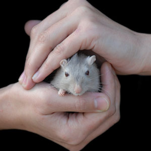 Europe Calls for Global Animal Testing Ban