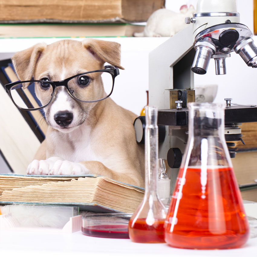Puppy-chemist-in-lab-850