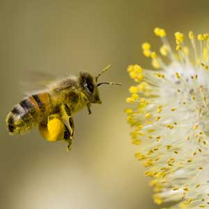 Study Finds Bee Pollen Buzzin' in Cosmetics